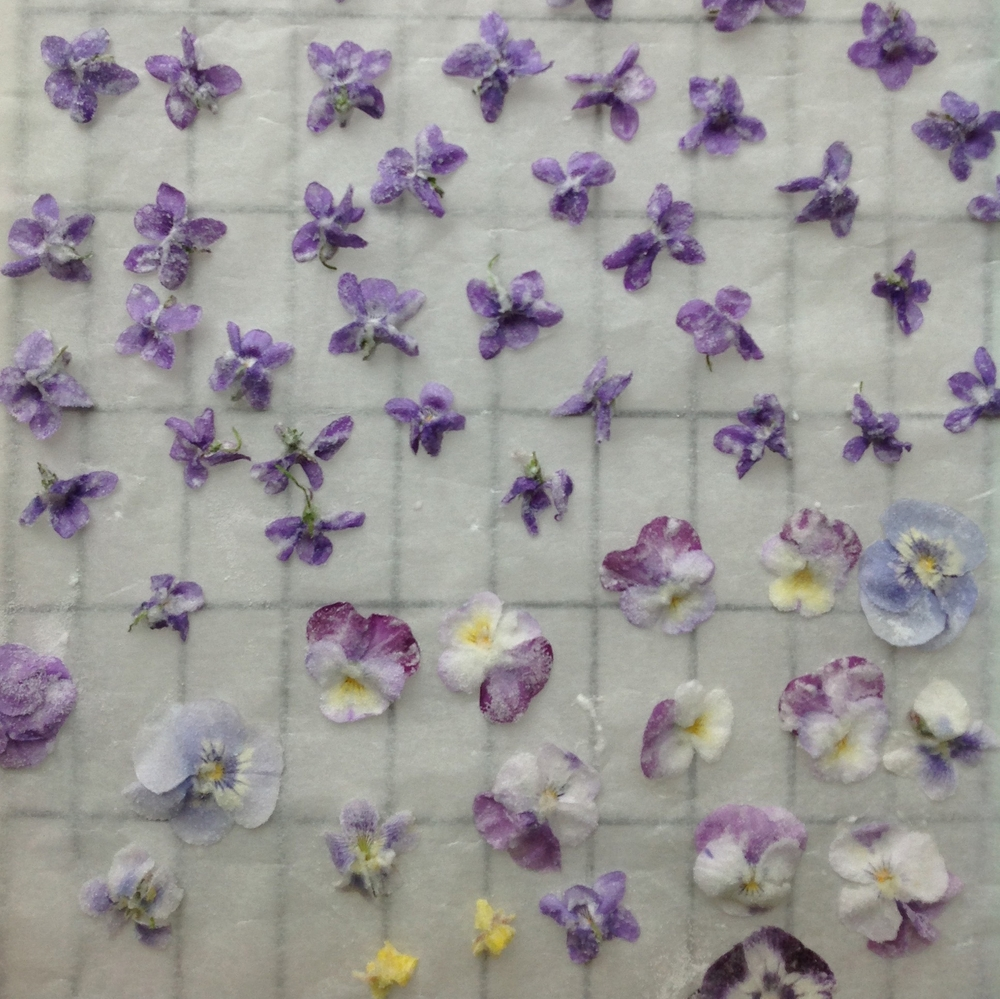 Once coated in egg white and sugar the violets were left to dry for 24 hours.