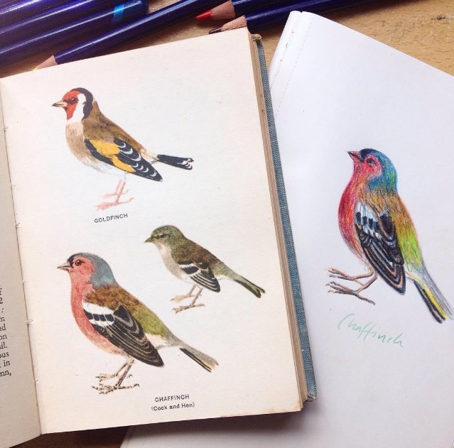 Got a really gorgeous vintage pocket bird book recently and have been using it a lot to draw pretty birdies from.