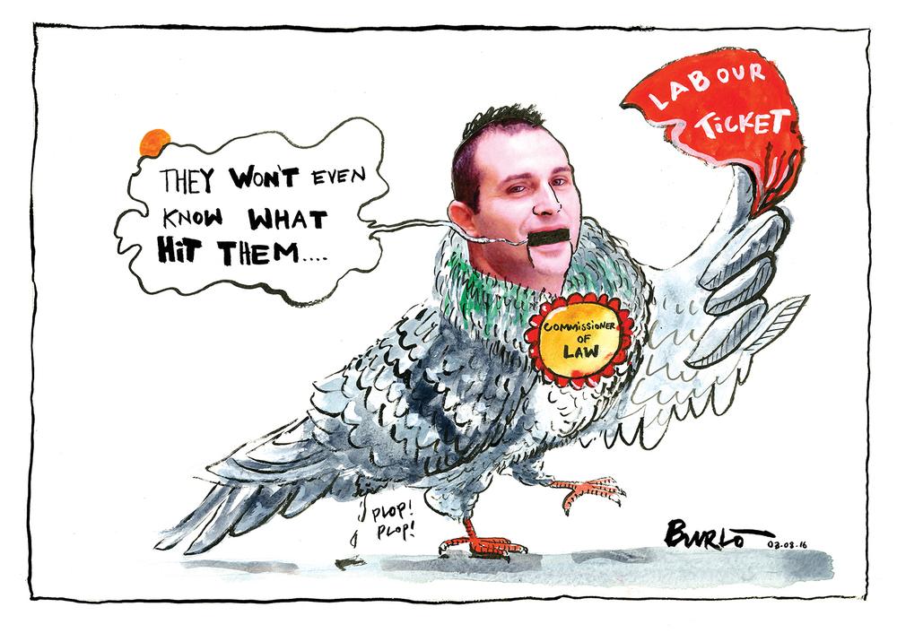 Political pigeon