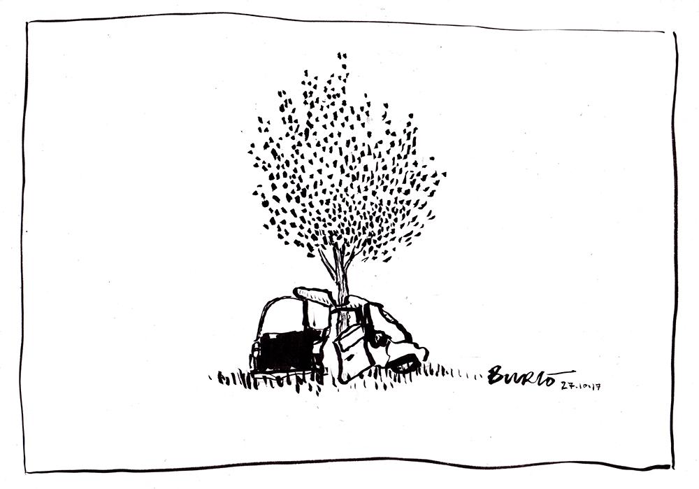 27.10.17. Bay-Laurel Tree(LR).jpg