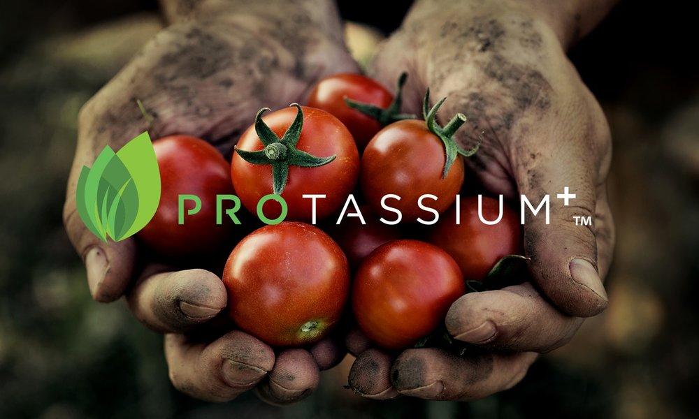 Protassium_BannerImage-min.jpg