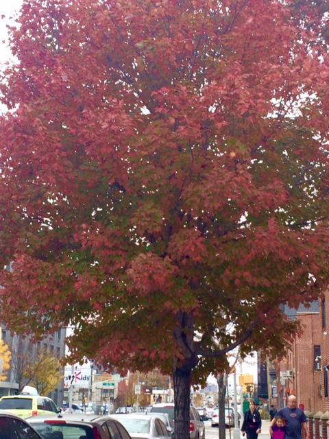 lic trees.jpg