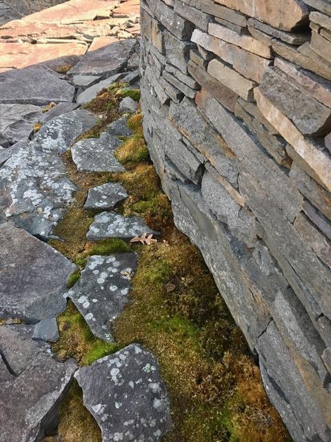 moss and rocks.jpg