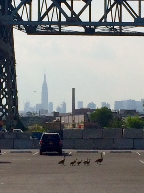 I took this photo in a parking lot in Queens - a family of birds doing their best to make it in the big city.