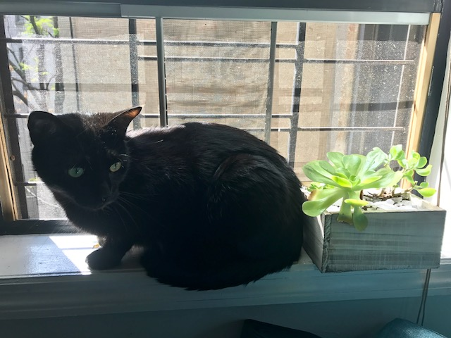 succulent franklin.jpg