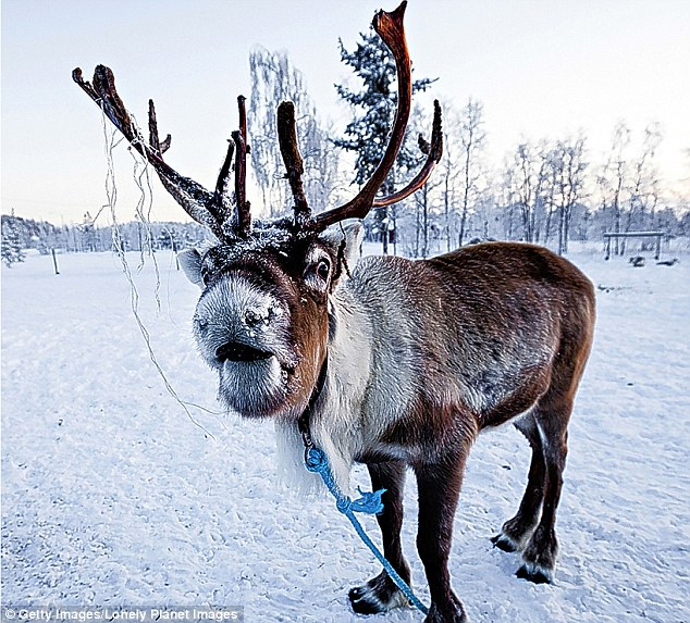 Santas Reindeer Relatives for YOUR classroom Inspired Classroom