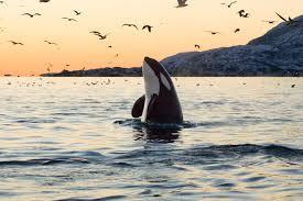 whales1.jpg