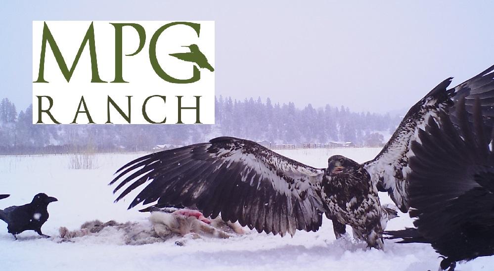 MPG Ranch Golden Eagle Challenge