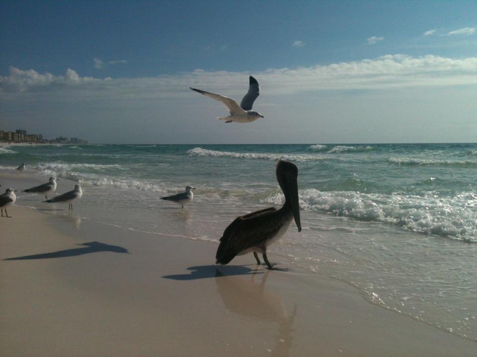 birds n beach.jpg