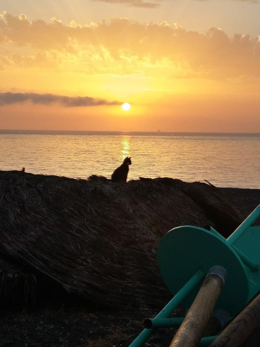 Santorini cat at sunrise.