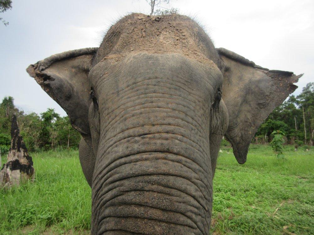 Cambodia Wildlife Sanctuary!