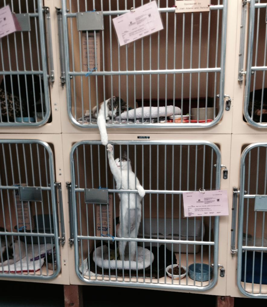 awwww-cute :     The shelter staff said they do this ALL DAY