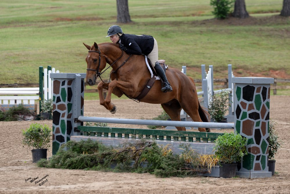 Jackson , 17 h seven year old gelding, out of thoroughbred mare Ms Mississippi. Just started showing in 3' Pre-Green.