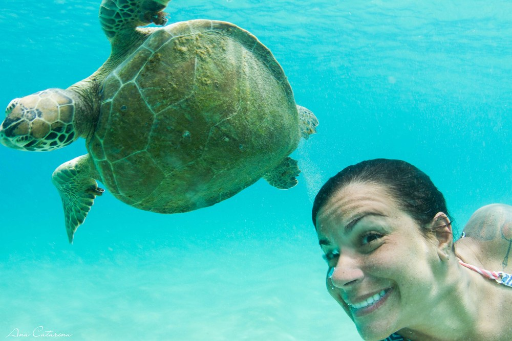 Clark Little acha que tartaruga só existe no Hawaii? #choraclarklittle #comgiratória