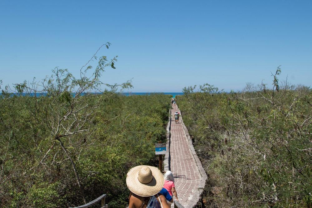 Caminho para Tortuga Bay.