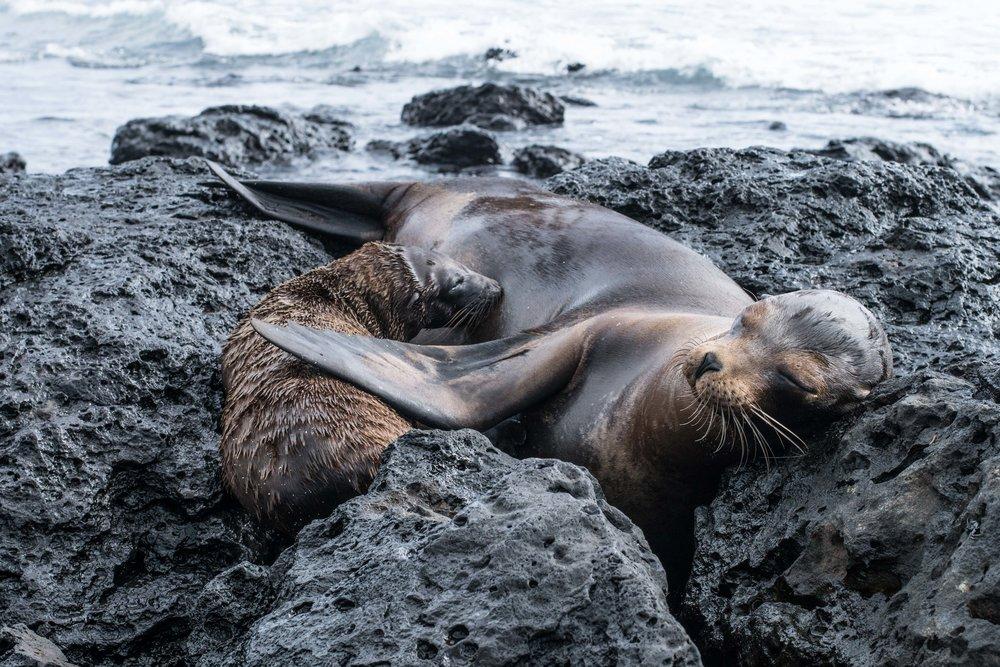 Galápagos-02757.jpg