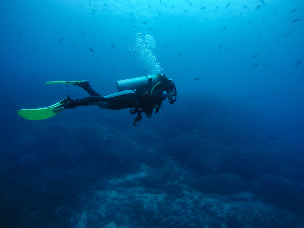 Galápagos-1395189.jpg