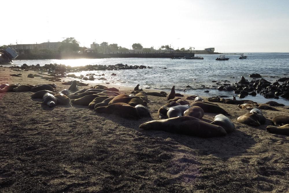 Galápagos-0266.jpg