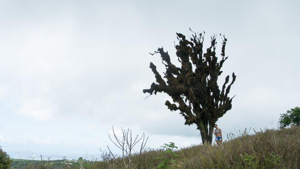 Galápagos-02891.jpg