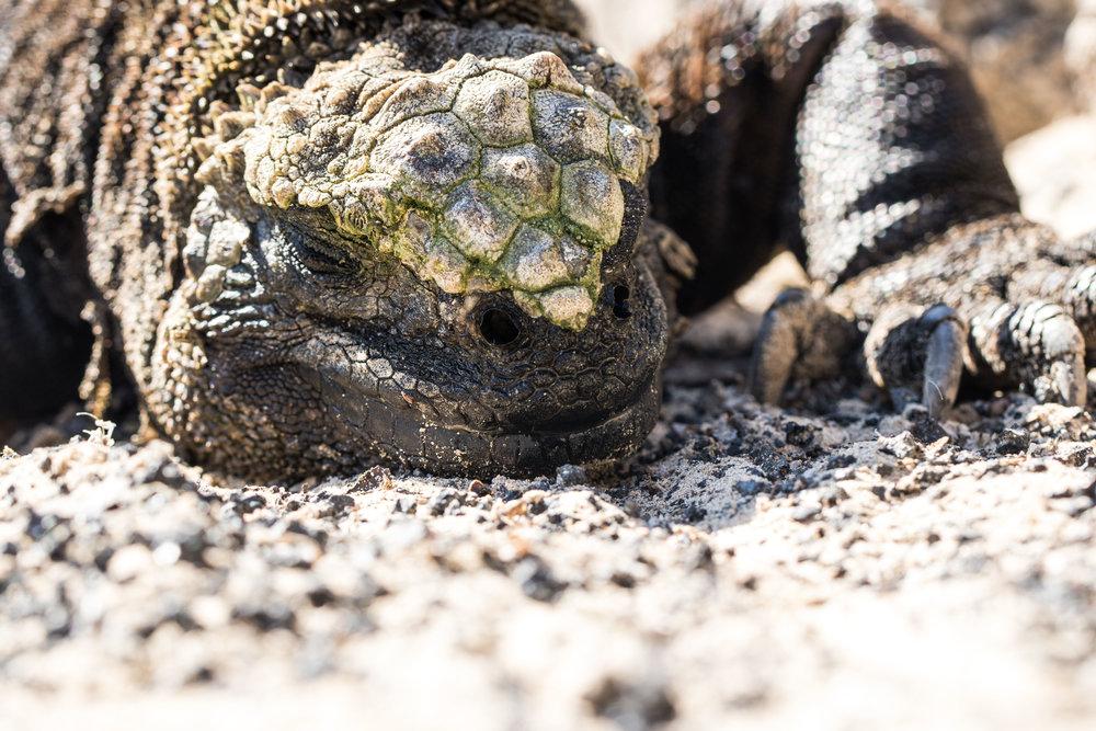 Galápagos-8519.jpg