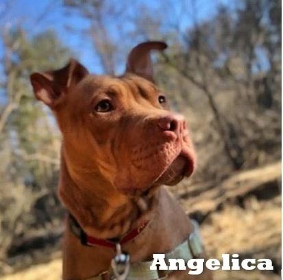 Angelica-07.jpeg
