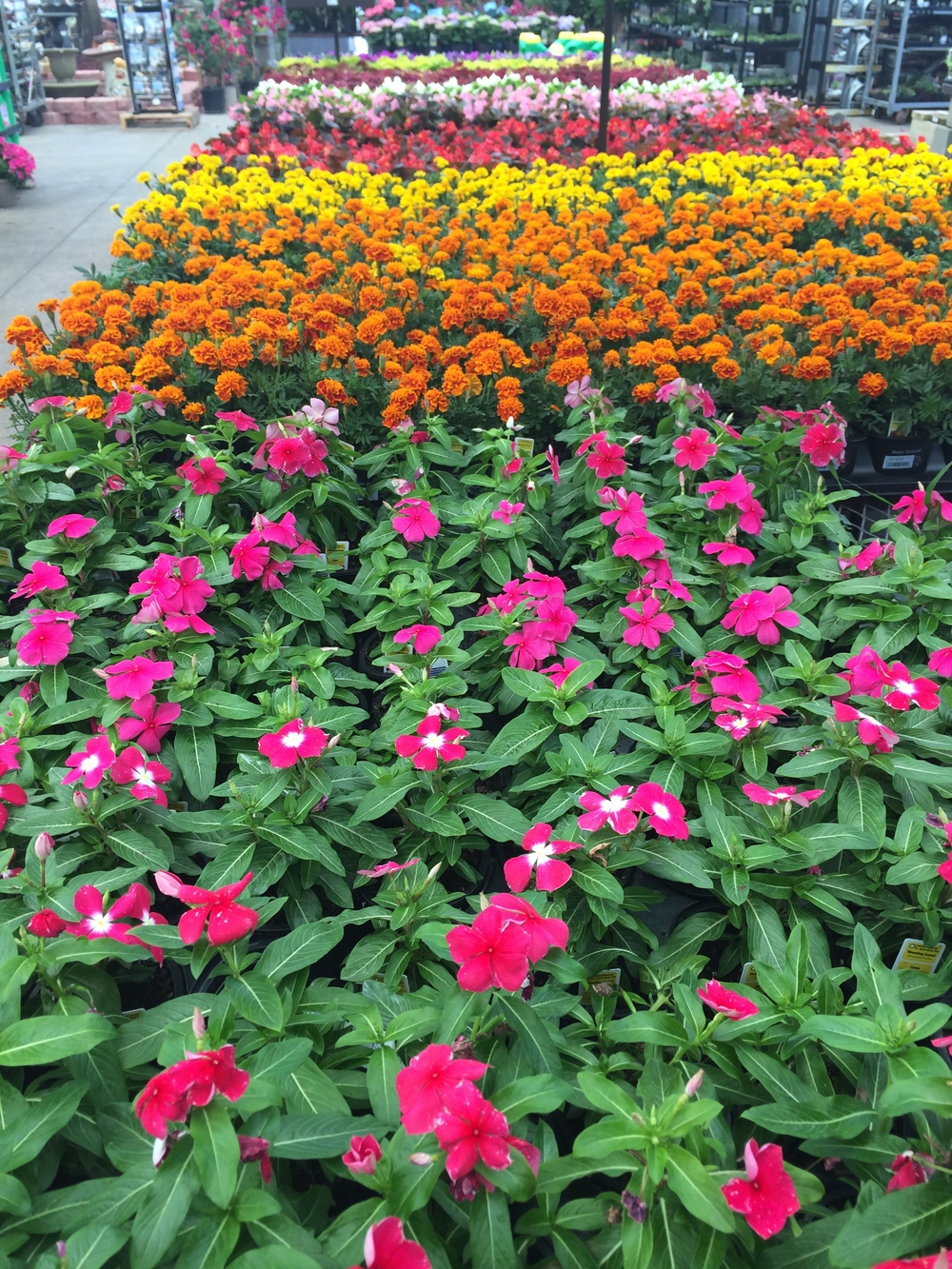 Home DeRosa Garden Center – Lowes Garden Center Plants