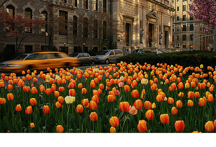 sneakers and pearls, magic places on earth, tulips, trending now, glamorgorgeous.png