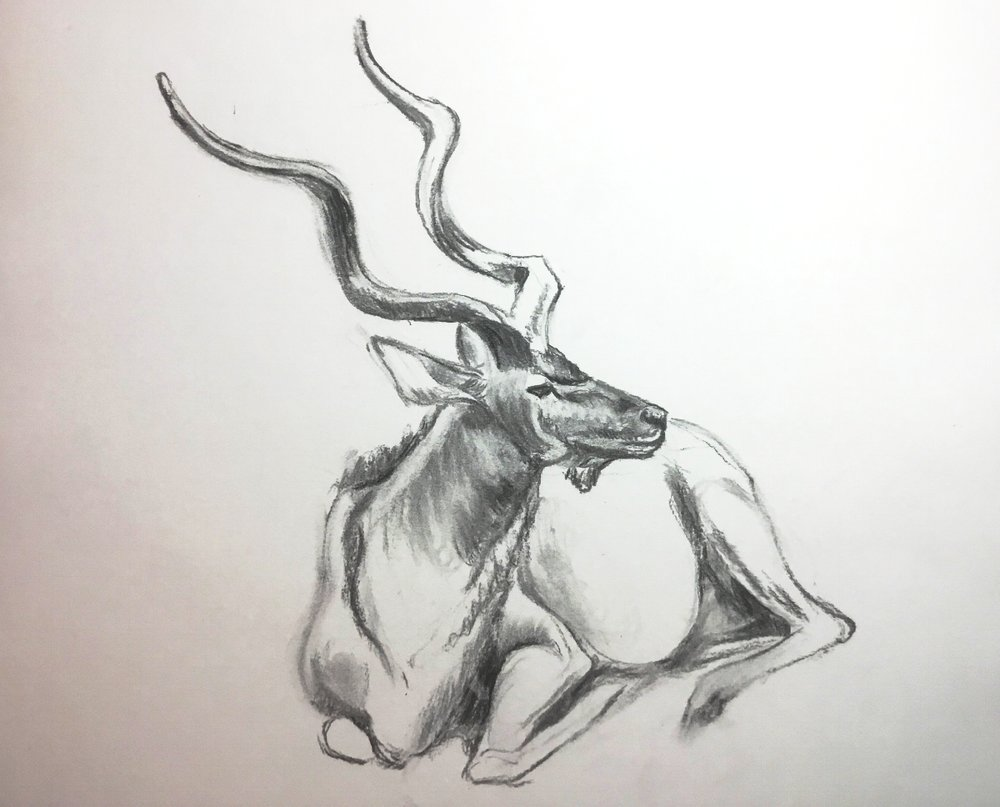4-Greater Kudu .jpg