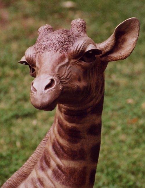 BabyGiraffe.jpg