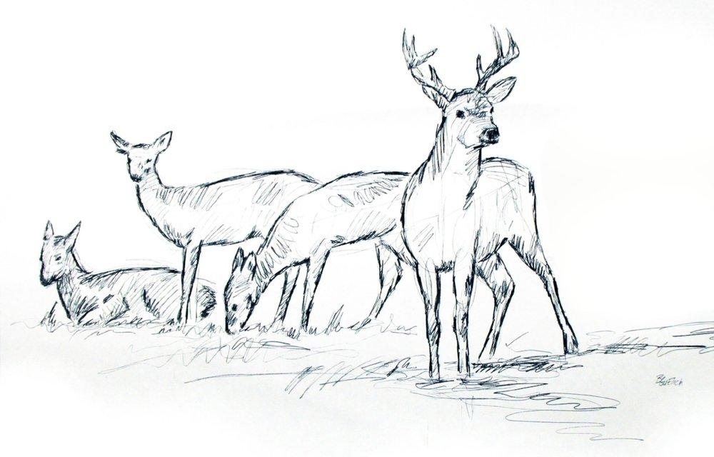 deer grouping.jpg