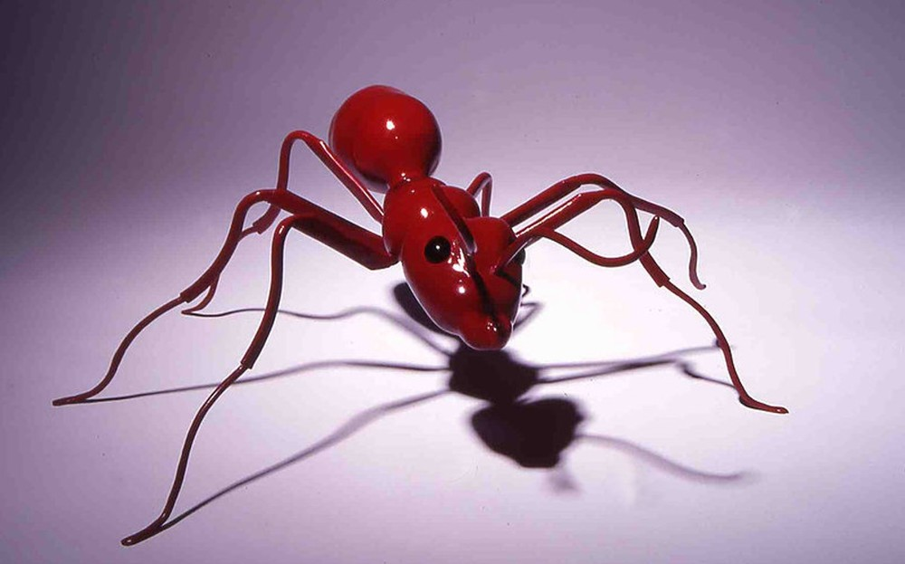 ant .jpg