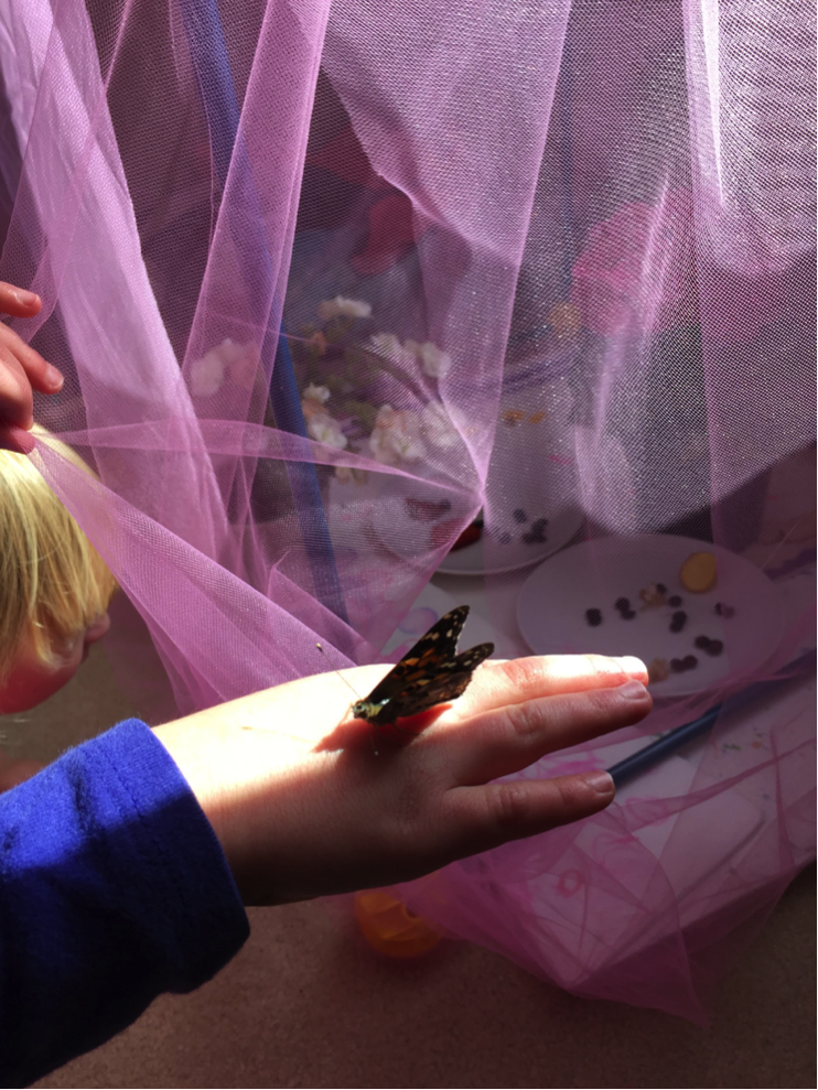 butterflies homeschool faith lessons
