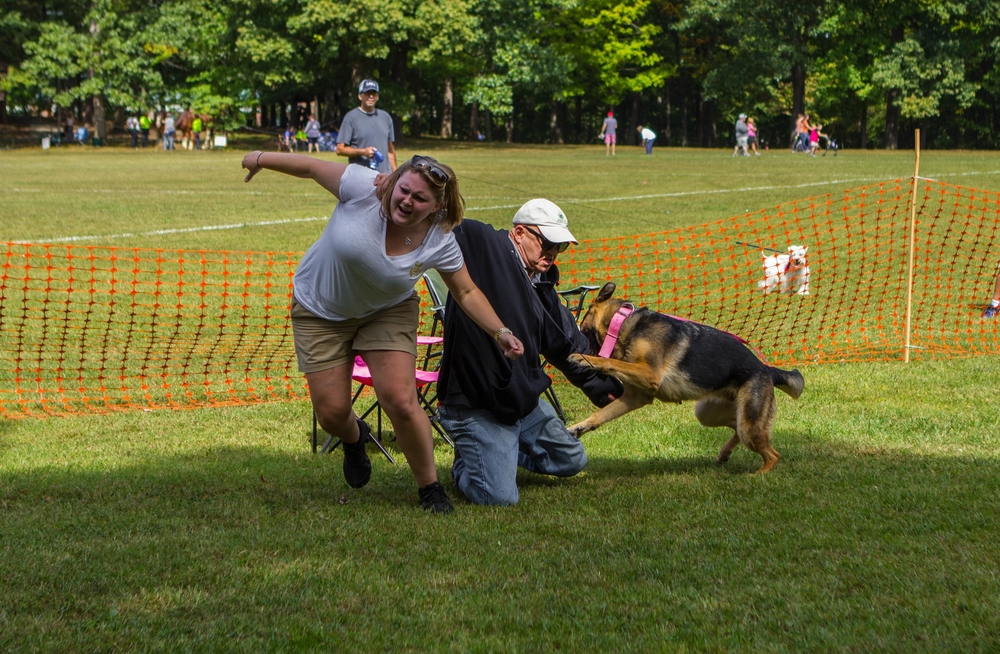 A trained K9 engages an aggressor in a Personal Protection Dog Demonstration in Winston-Salem. This person was friendly and passive to me and the K9 before his attempted attack that the dog prevented.