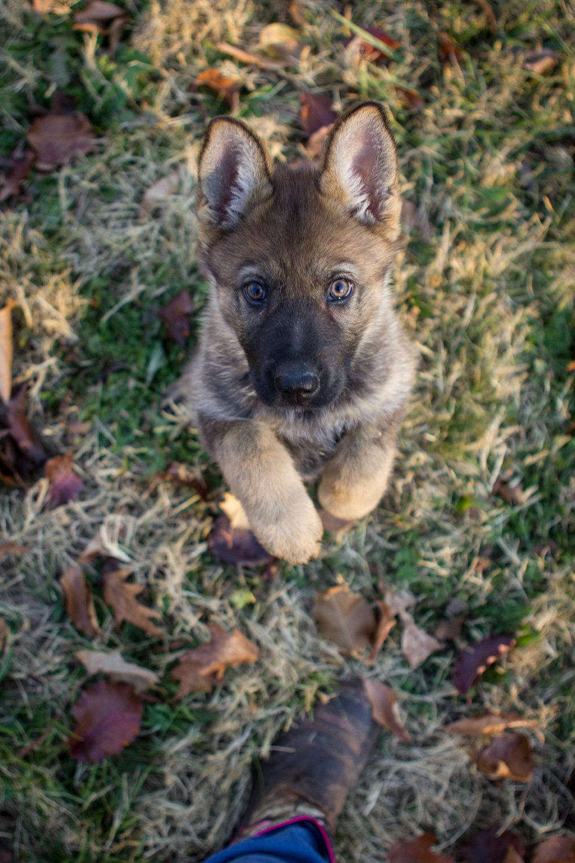 H Puppy-1.jpg