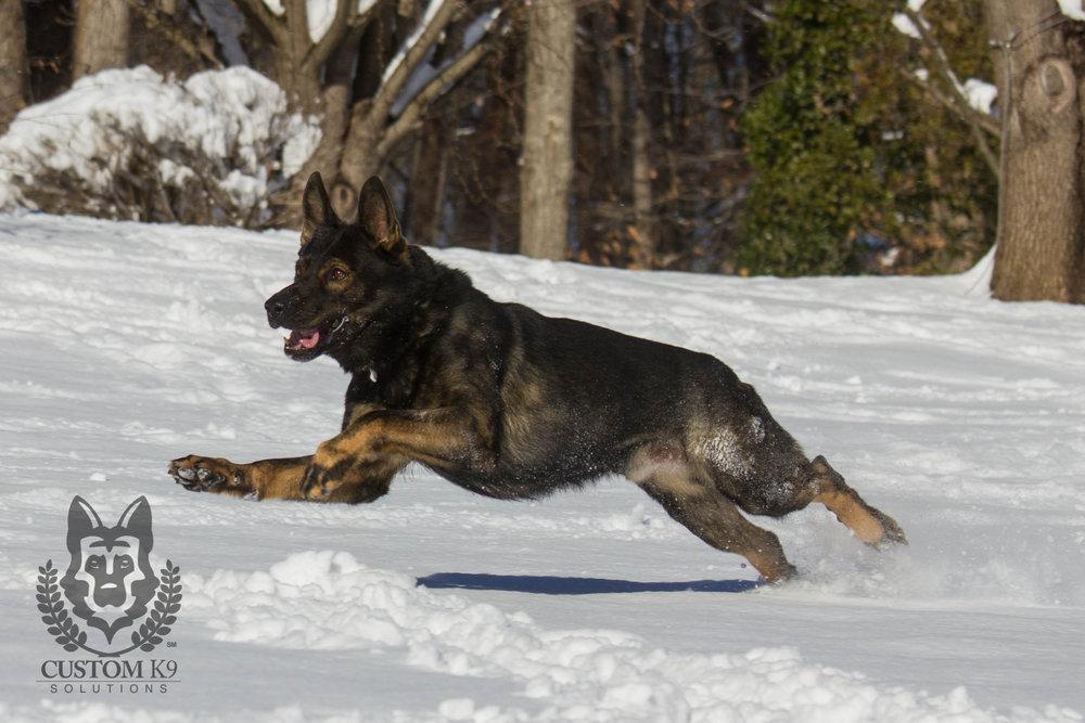 Ayk Snow-2.jpg