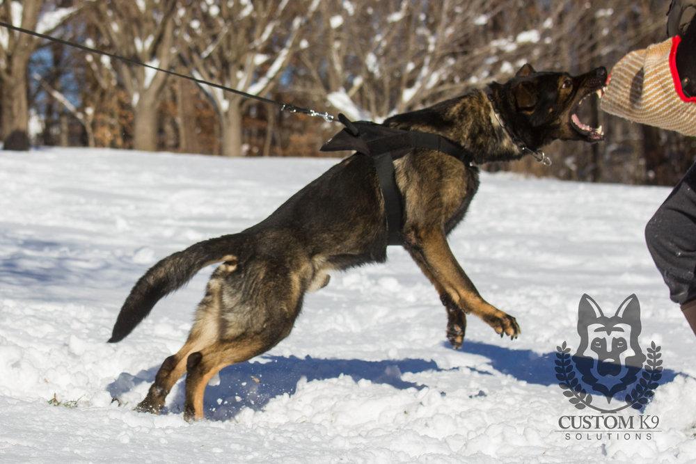 Ayk Snow-12.jpg