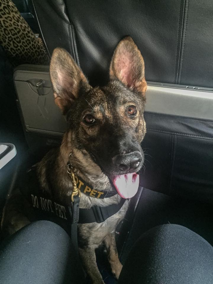 Karma flying with me on a commercial flight.