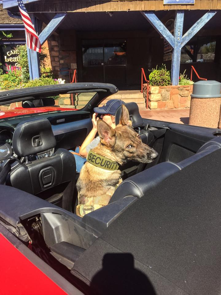 Karma waiting on me in the convertible in Sedona AZ.