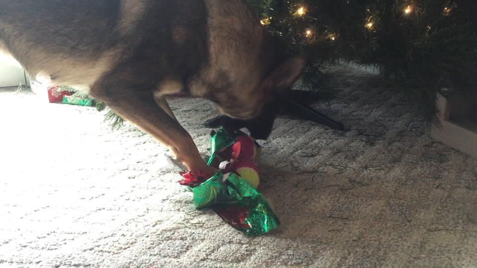 Karma unwrapping her Christmas gift.
