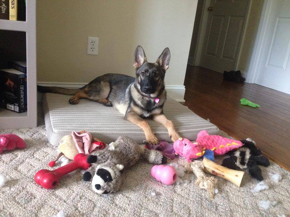 Puppy Karma was a toy hoarder.