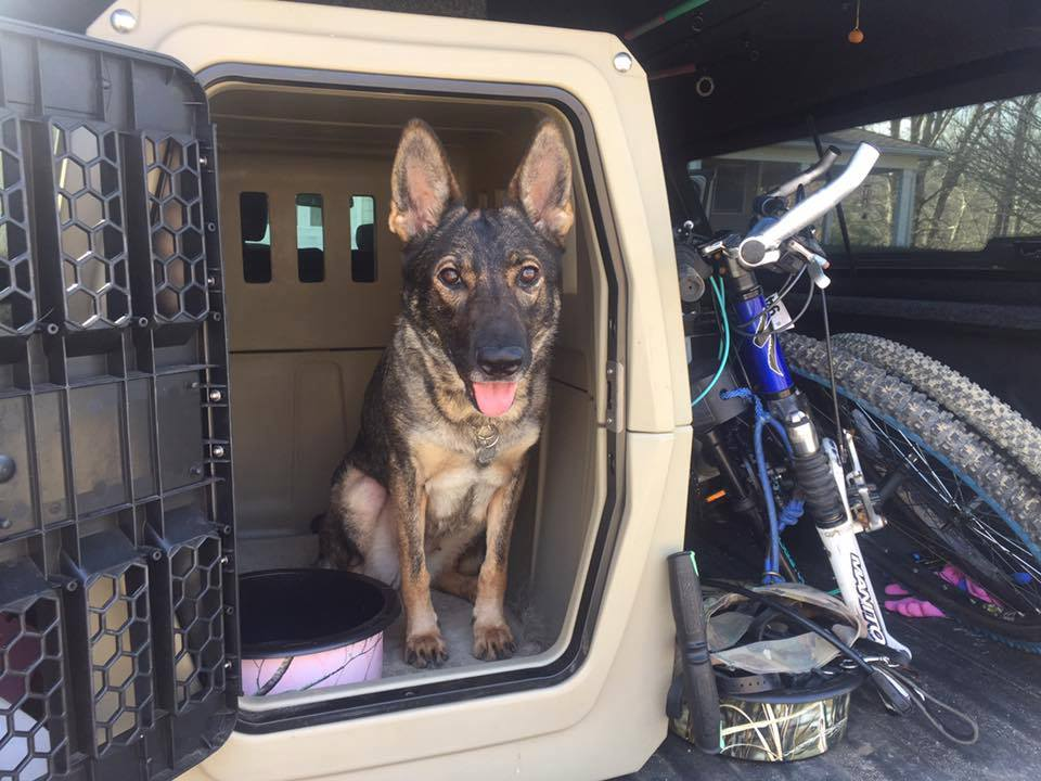 Karma ready to head to the bike trail.