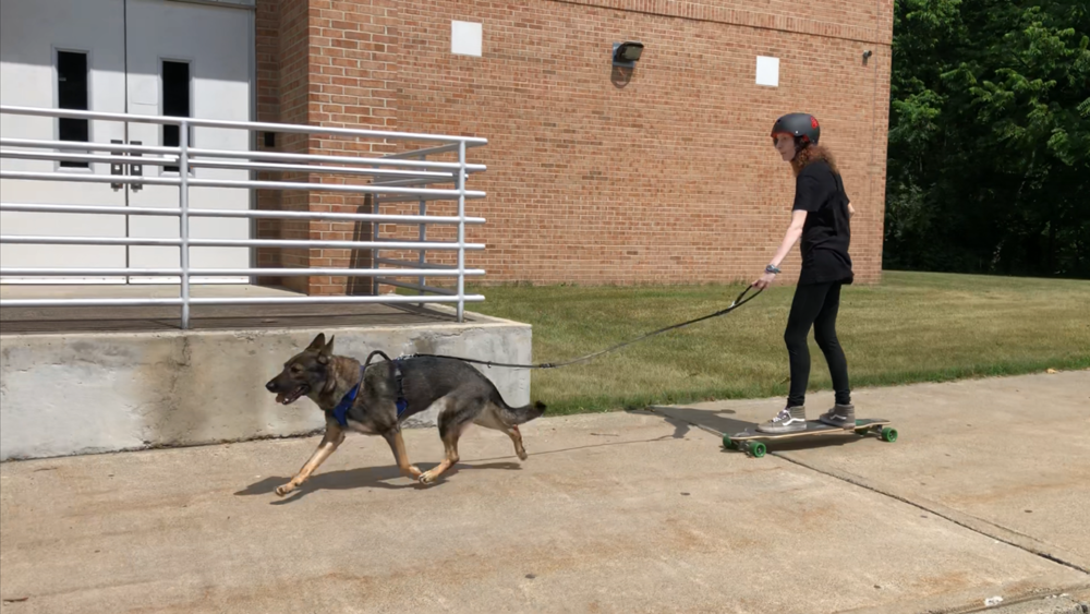 Karma exercising with her new handler.
