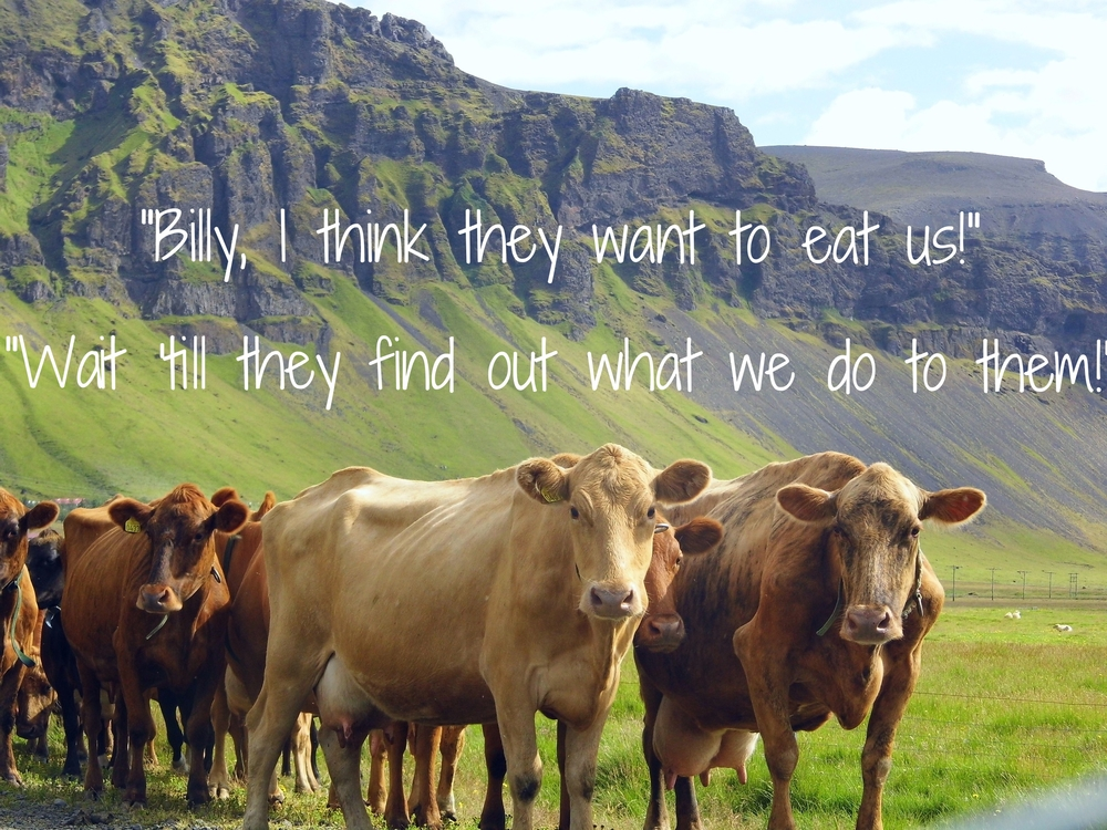 cows_cow_meat.jpg
