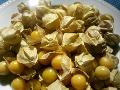 ground-cherries-400x298