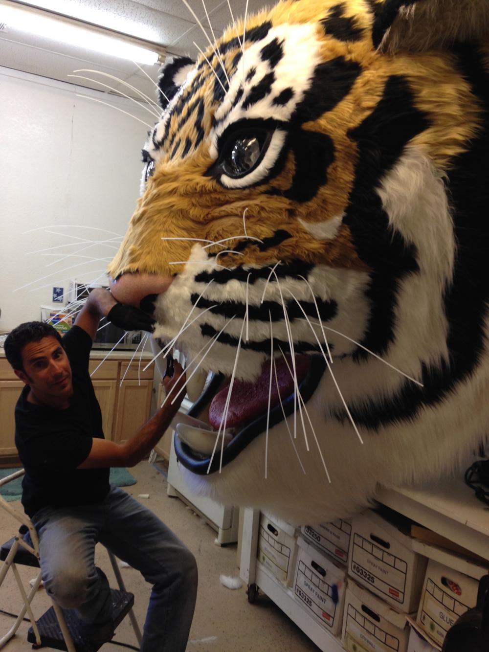 Matthew McAvene installs teeth into large tiger head sculpture.jpg