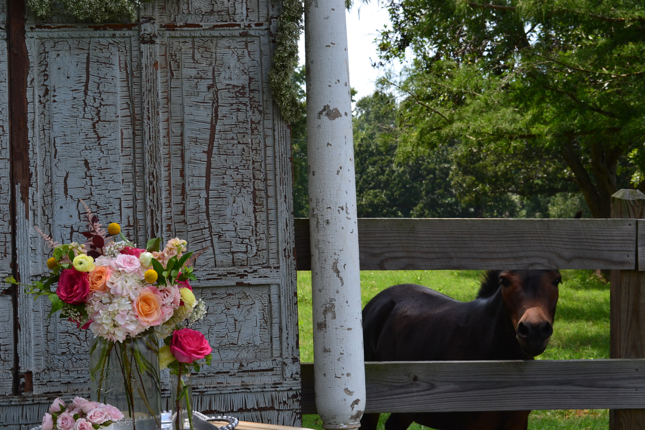 flowers with mule