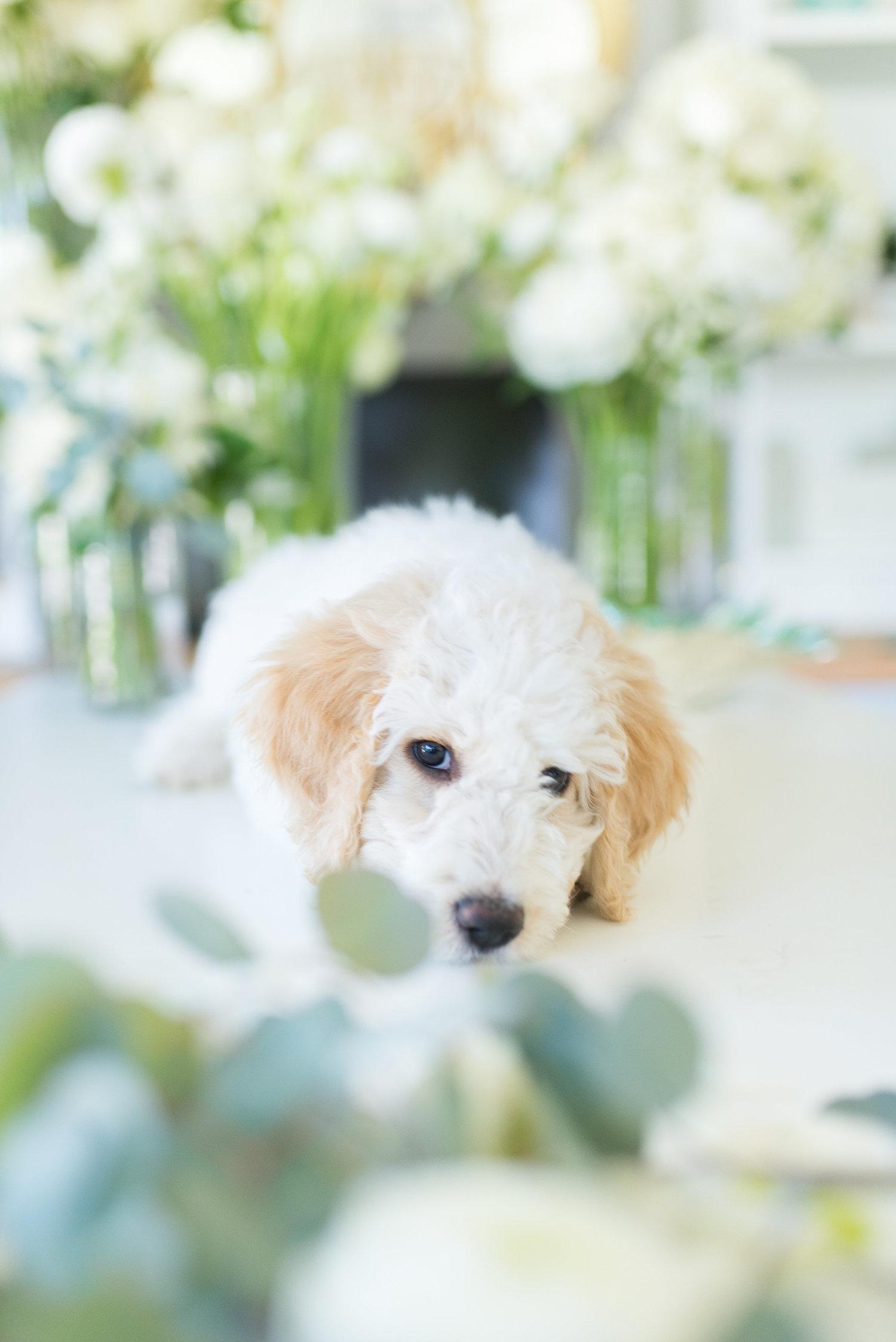 Blog — Flourish Floral Design
