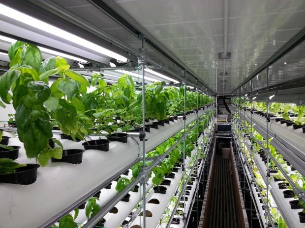 hydroponics nft.jpg