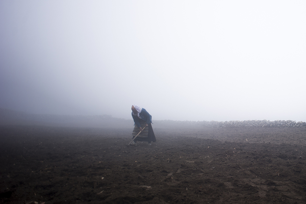 A Sherpa woman works on levelling the dirt and burying any uncovered potatoes as the evening fog rolls into Phortse.