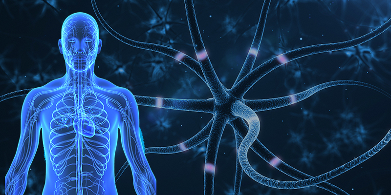 neuropathynerve.jpg